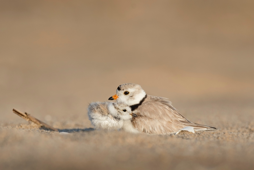 little birds love.jpg