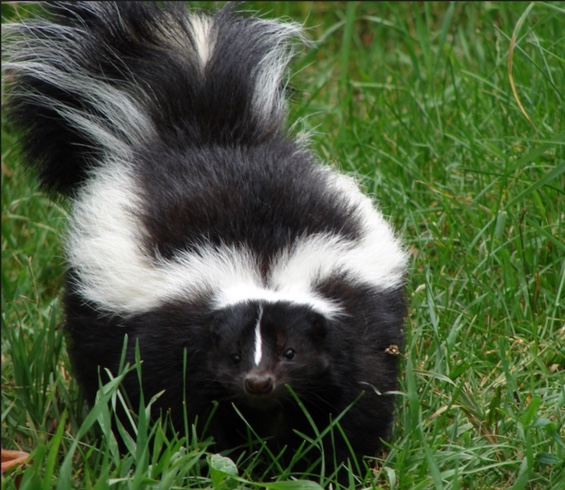 You Smell Like A Skunk